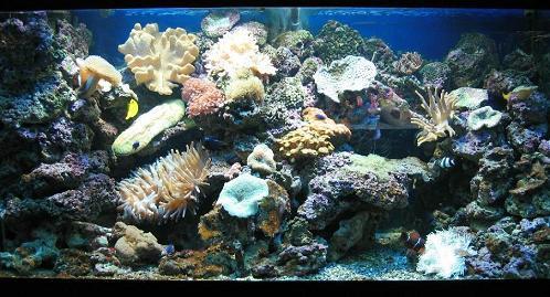 aquarium_meer_m.jpg