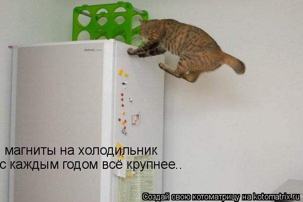 kotomatrix_01.jpg