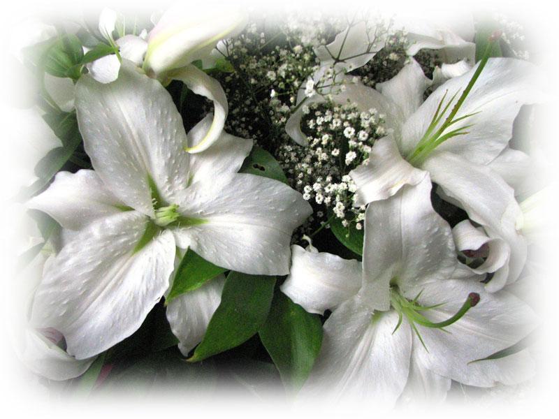 buket-lilii.jpg