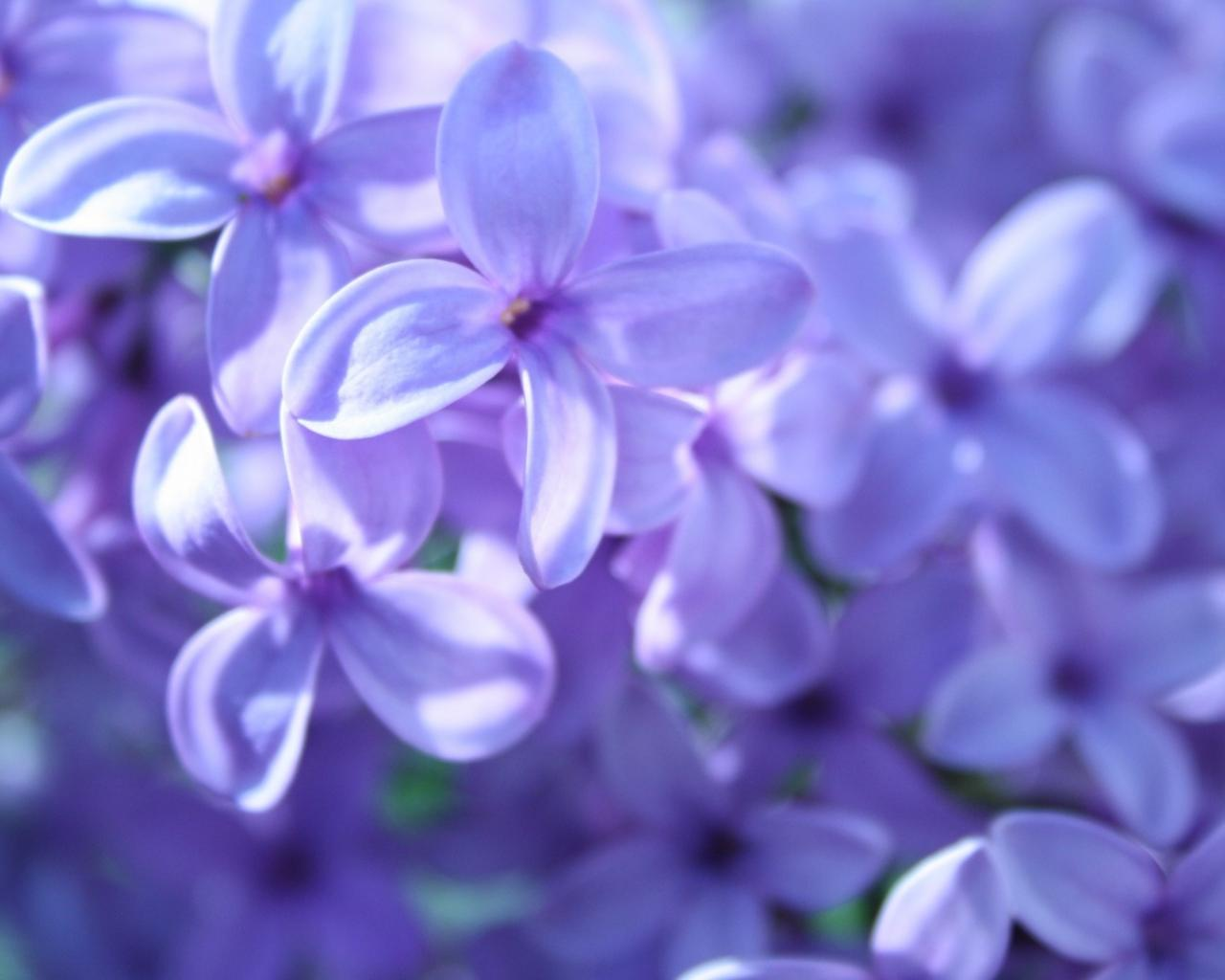 hq-wallpapers_ru_flowers_45330_1280x1024.jpg