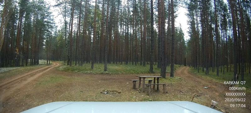 Лес-4.jpg