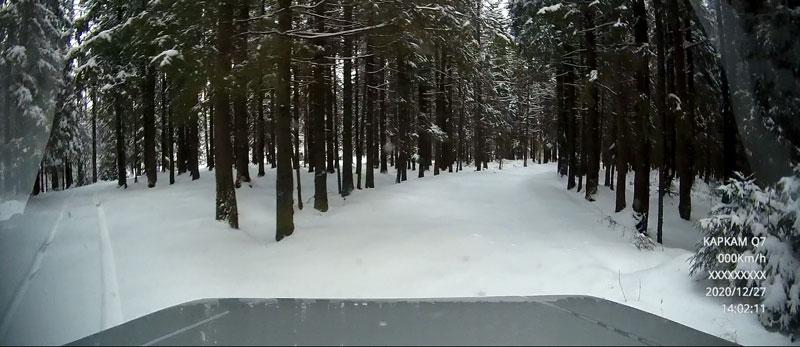 Лес-1.jpg