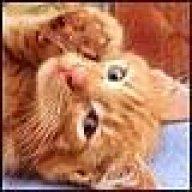 Кошка на крошке