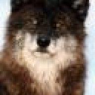 Wolf Pskov
